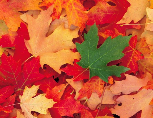 alimentos temporada otoño