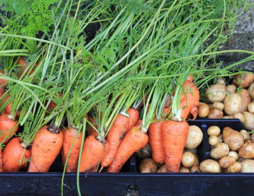 zanahorias-nutricionista-valencia-nutt-elisa-escorihuela