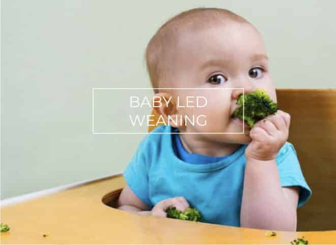 TALLER BABY LED WEANING