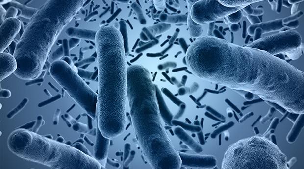 Microbiota o flora intestinal