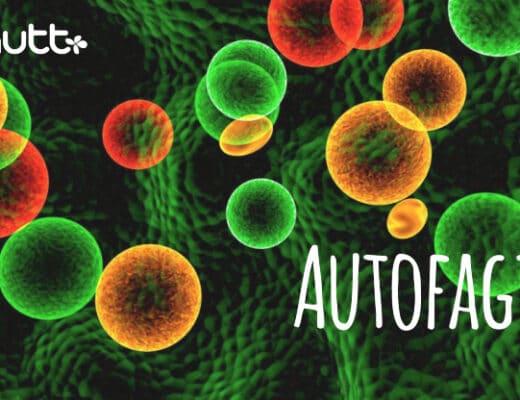 Autofagia y ayuno intermitente nutricionista