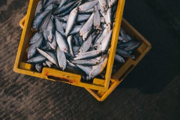 Creatina en deportistas alimentos pescado nutricionista valencia nutt